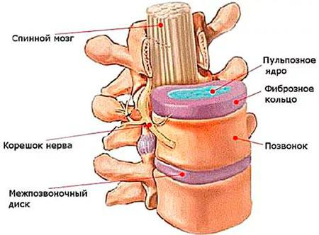 Упражнения для шейного отдела позвоночника при грыже и протрузии позвоночника