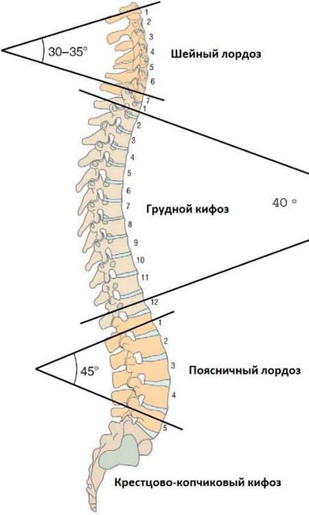 Протрузии и грыжи шейного отдела позвоночника лечение